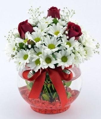 Fanusta 3 Gül ve Papatya  Samsun kaliteli taze ve ucuz çiçekler