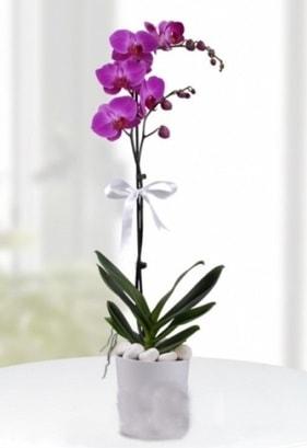 Tek dallı saksıda mor orkide çiçeği  Samsun güvenli kaliteli hızlı çiçek
