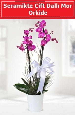 Seramikte Çift Dallı Mor Orkide  Samsun çiçekçi telefonları