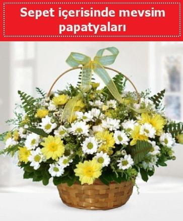 Sepet içerisinde mevsim papatyaları  Samsun hediye sevgilime hediye çiçek
